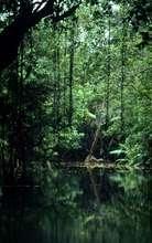 Ujung Kulon National Park, Java, Indonesia