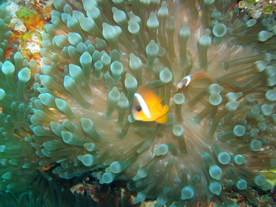 Coral Reef Fish, Fiji @Stacy Jupiter