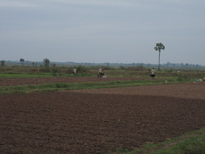 The adjacent fields where some of the parents work.