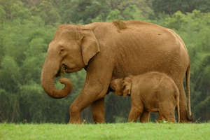 Securing Tiger and Elephant Habitat in India