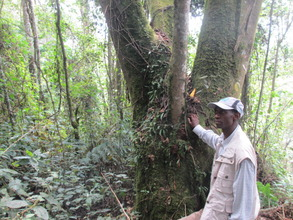 A mature forest in Nyungwe National Park