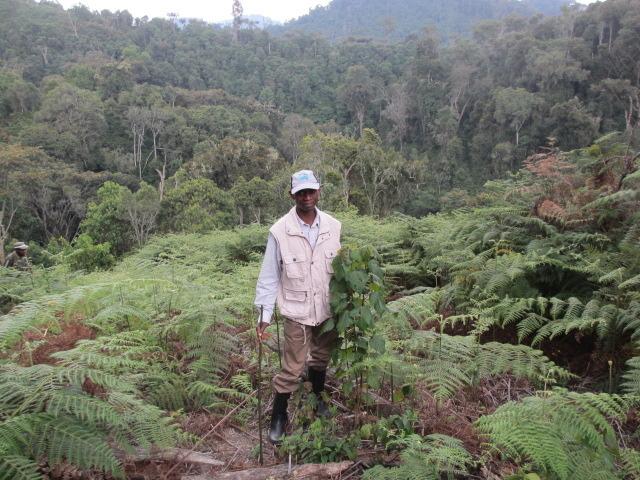 Felix undertaking forest restoration work
