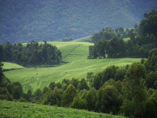 Restore a Forest in Rwanda