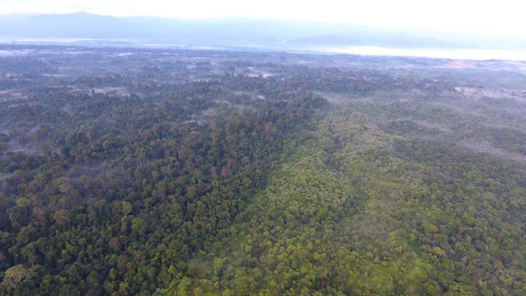 Gunung Leuser National Park from a drone