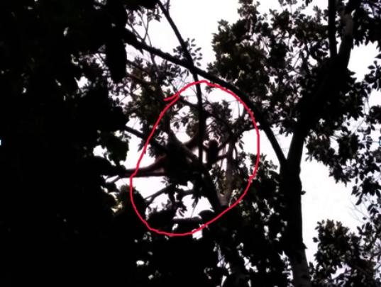 orangutan and baby found during monitoring