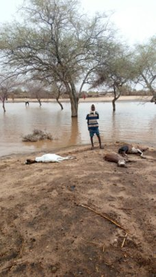 Floods missed the village but many goats drowned