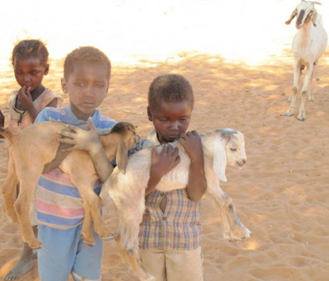 A Goat Loan means milk - no more hungry nights