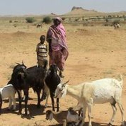 A loan of 6 goats can transform a family