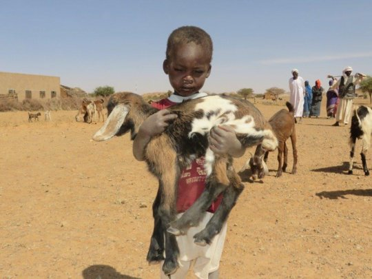Goat Loans save lives in Darfur