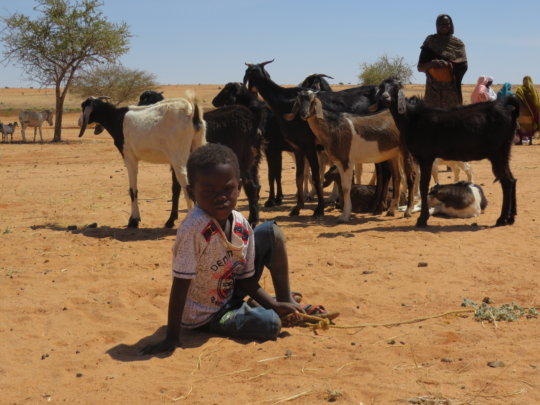 A flock of goats means income for the first time