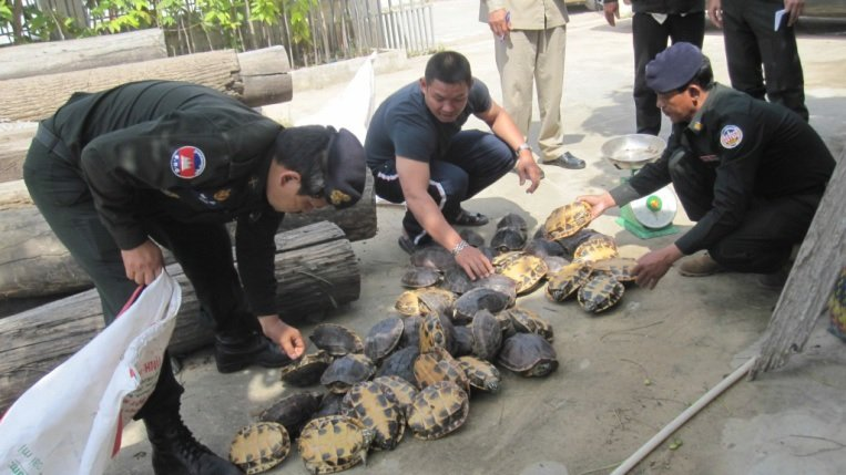 47 Snail-Eating Turtles Rescued from a Trader