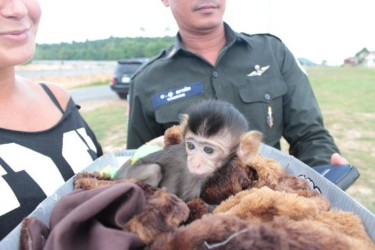 Hotline call from a tourist about a baby macaque