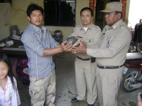 Rescued pangolin given a second chance at life