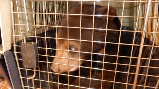 Sun Bear cub rescued in Ratanakiri prison