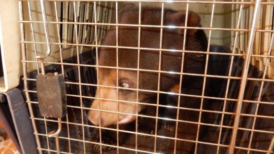 Sun Bear cub rescued in Ratanakiri prison