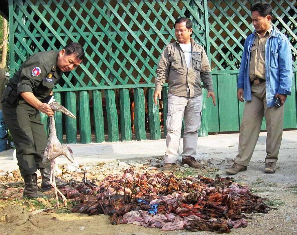 Special Focus on Wild Meat