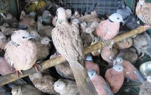 84 Birds Rescued