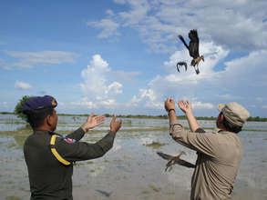 Team Members Release Whistling Ducks