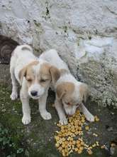 Hungry malnourished puppies who lost their mom