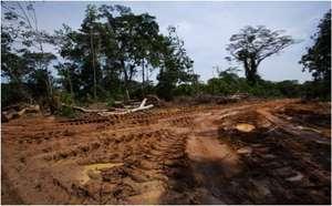 dug up earth.jpg