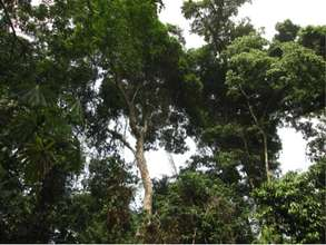 Thin forest canopy from forest degradation