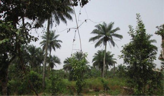 Subsistence farming impacts