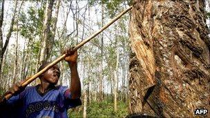 Rubber, a big business in Liberia
