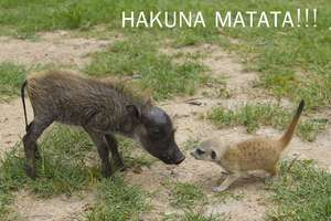 Baby Timon and baby Pumbaa