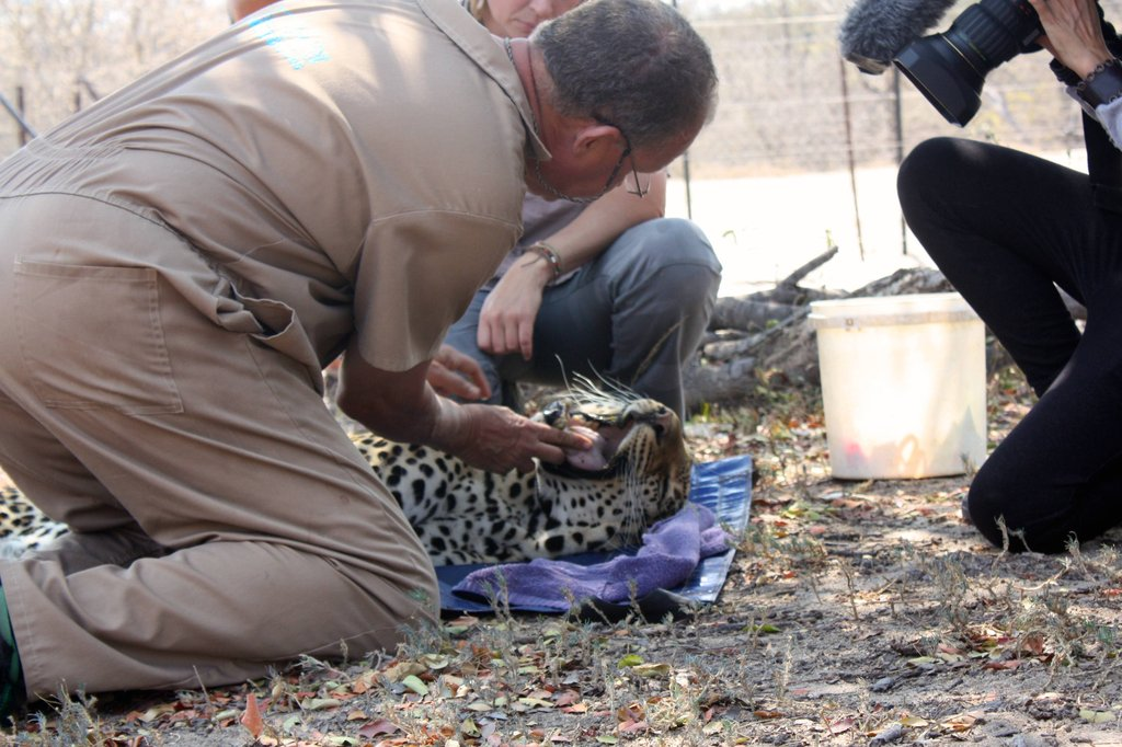 Wildlife vet, Peter, checks Shiloweni