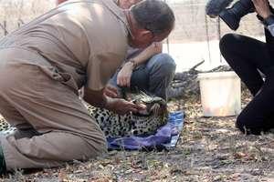 Wildlife vet, Peter, checks Shiloweni's teeth