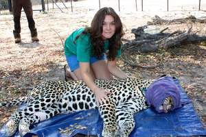 Marketing volunteer, Amy, stroking the leopard