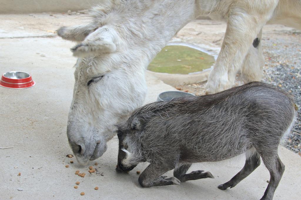 Piggy and Eeyore!