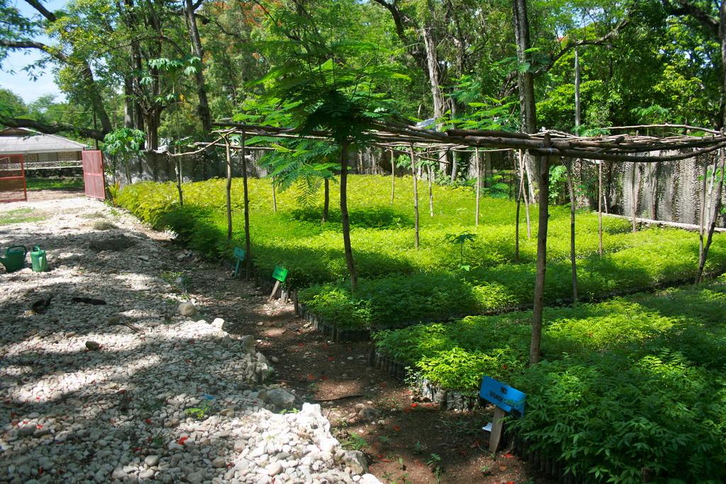 Reforestation program plants 1 millionth tree!