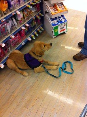 Seizure-Response Dog for Devin