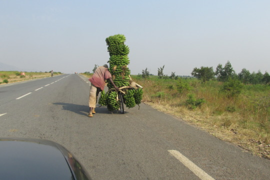 A man transporting bananas on his bicycle