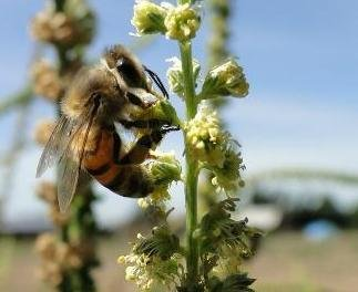 Bring Back Bees to Mexico's Degraded Farmlands