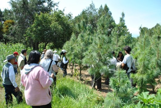 Reforestation area in Tlascala, Mexico