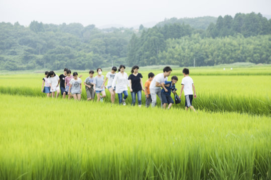 Walking together in a paddy rice field