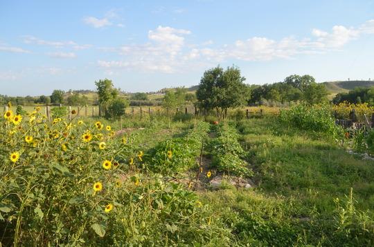 Solar Warrior Farm - August 2013