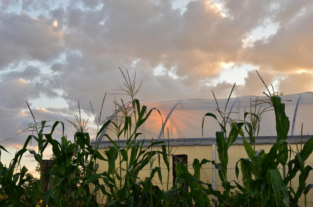 Sunset at Solar Warrior Farm