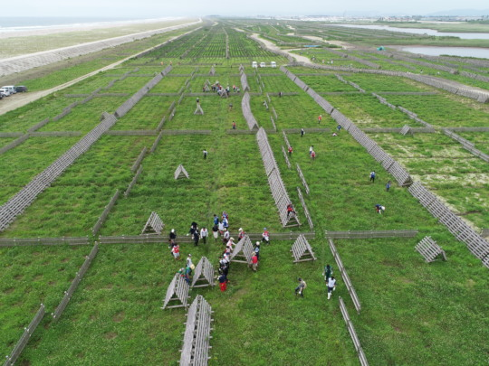 Project site`s aerial view with the volunteers.