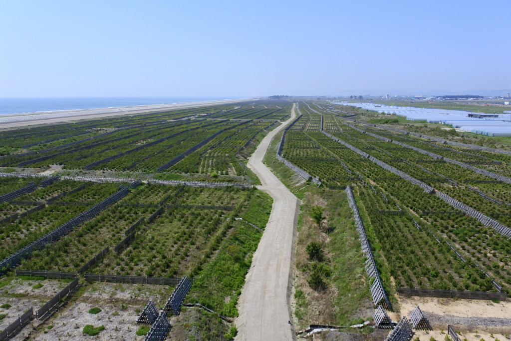 Aerial picture of the planting site.