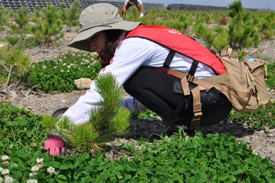 Constant maintenance guarantees seedlings survival