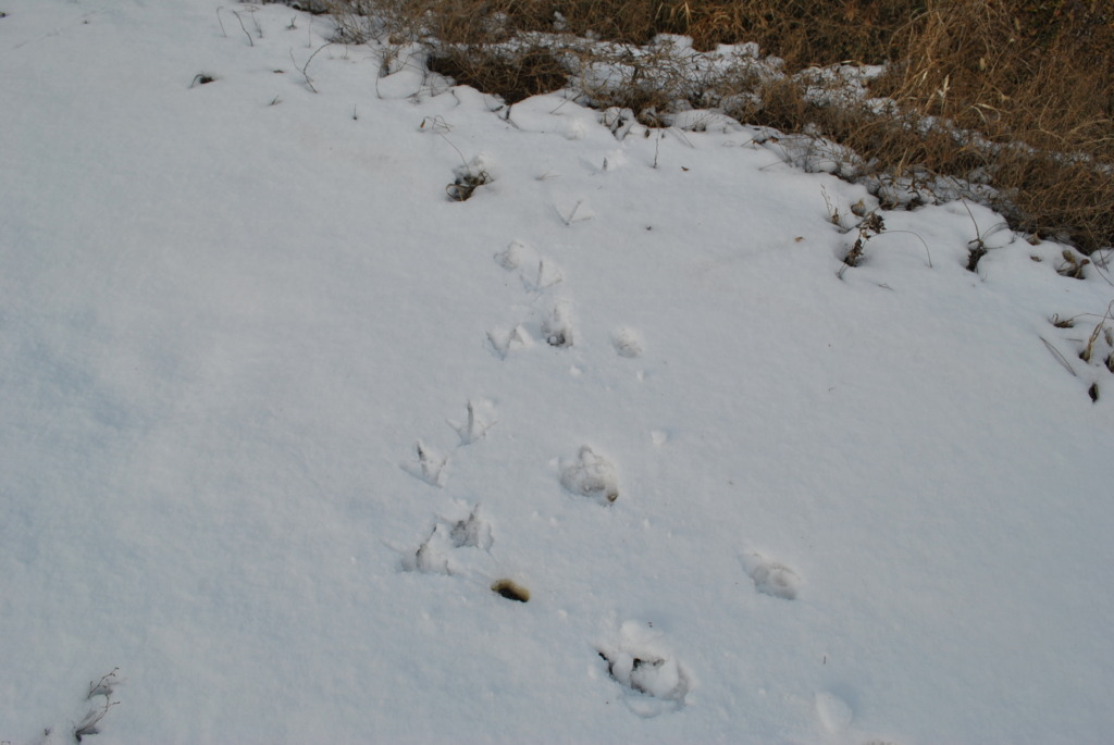 Footprints of birds in the planting site.