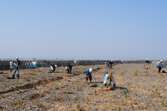 Forest workers during the tree planting activities