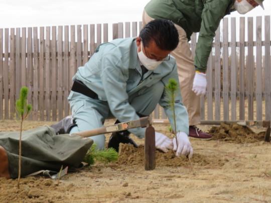Mayor Shiro Yamada while planting black pines.