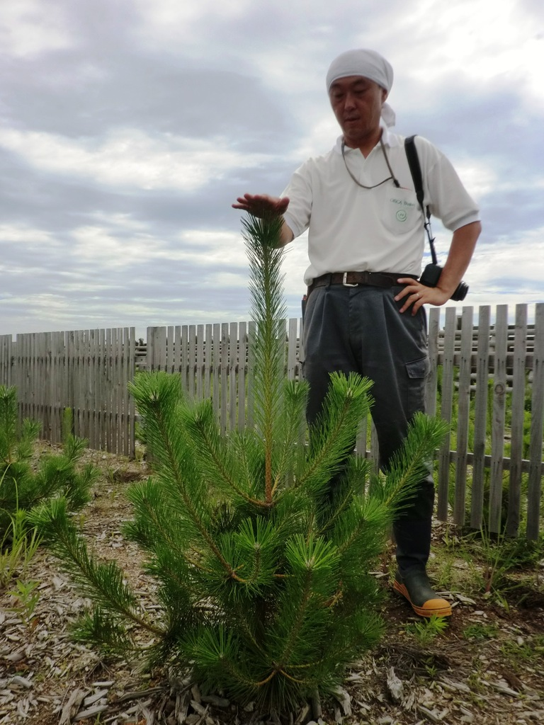 Seedling planted in 2014 is now 1.15 m tall.