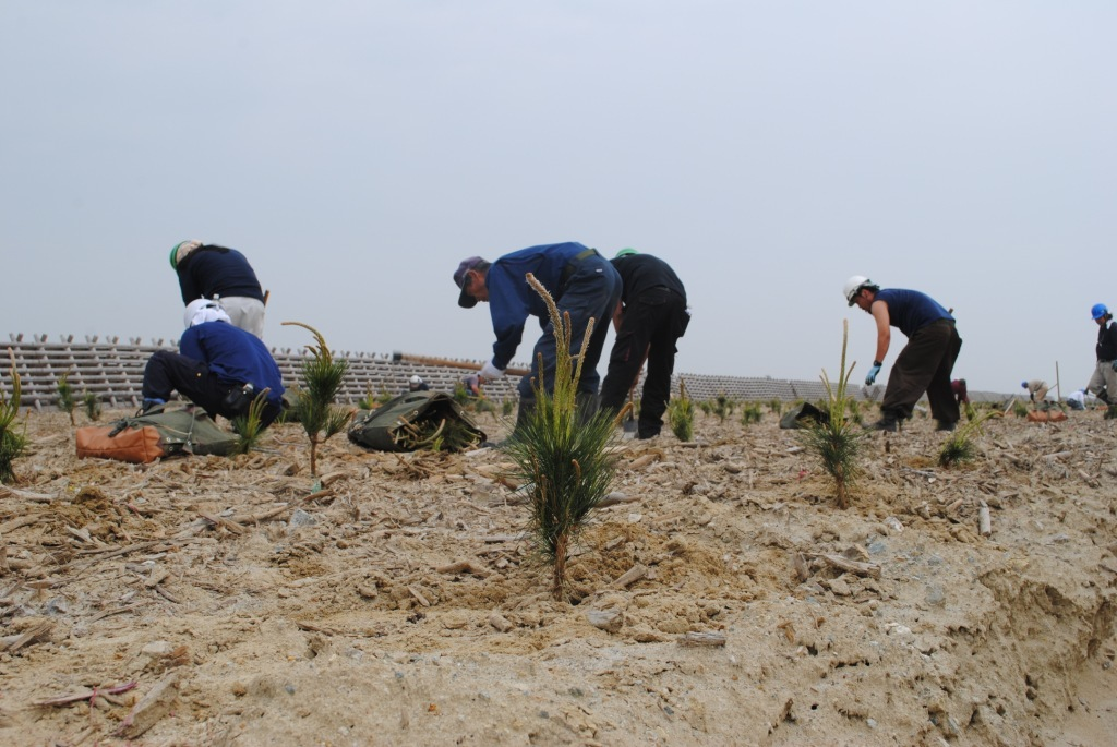 The actual tree planting activity.