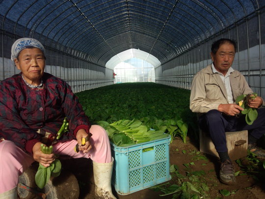 The local farmers are now growing vegetables.