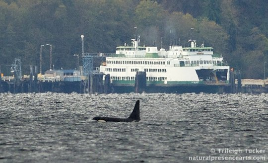 Orcas & Seattle Ferry, Nov. 22, by Trileigh Tucker